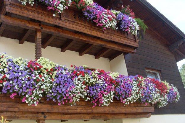 Balkonblumen Blumen Kefer