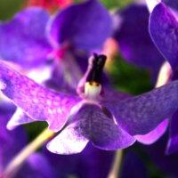 Blumen Orchidee Blumenhof