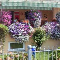 Balkonblumen Sommerlich