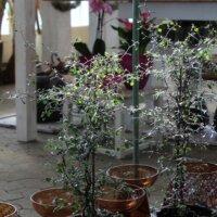 Dekoration mit Zimmerpflanzen